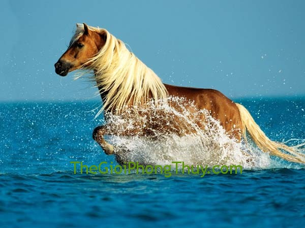 Horse-in-the-sea